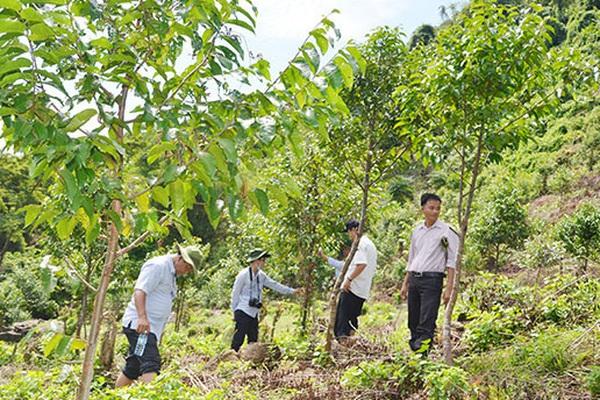 WB sẽ thanh toán hơn 1.200 tỷ đồng cho Việt Nam để giữ rừng, giảm phát thải khí nhà kính tại 6 tỉnh miền Trung