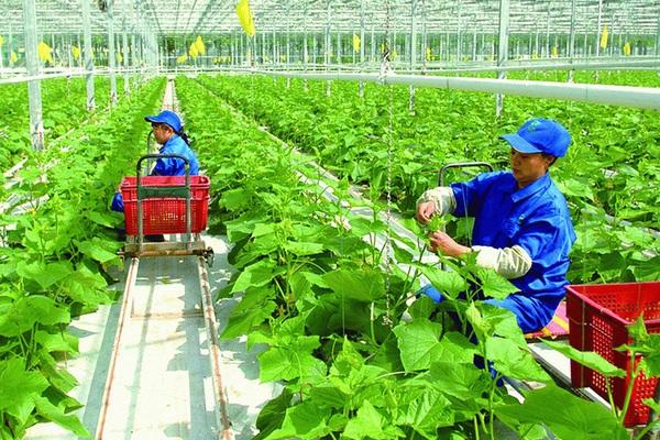 Lào Cai: Đếm không hết các mô hình nông nghiệp công nghệ cao, khách ăn dâu tây ngay tại vườn