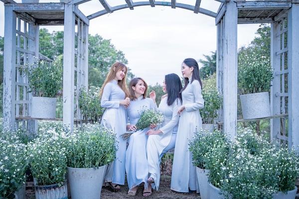Cúc họa mi nở sớm, thiếu nữ Hà thành nô nức rủ nhau chụp ảnh giữa vườn hoa