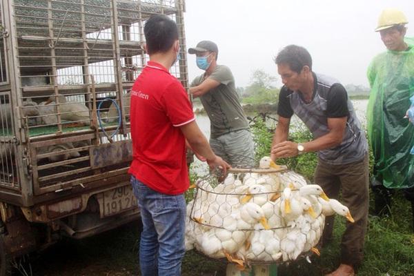 Giá gia cầm hôm nay 25/10: Nuôi gà, vịt theo cách này, nông dân bớt lo đầu ra