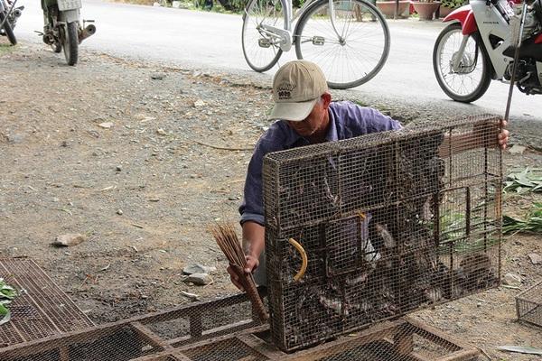 An Giang: Những cái chợ tự phát tất bật mua bán loài gặm nhấm làm ra những món đặc sản nhiều người săn lùng
