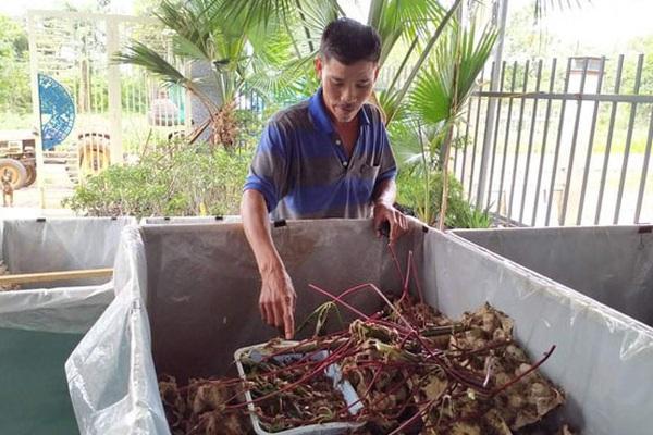 Đắk Lắk: Nuôi loài tắc kè đặc sản bám dính như keo, chăm nhàn như giải trí mà ông nông dân 7X kiếm bộn tiền