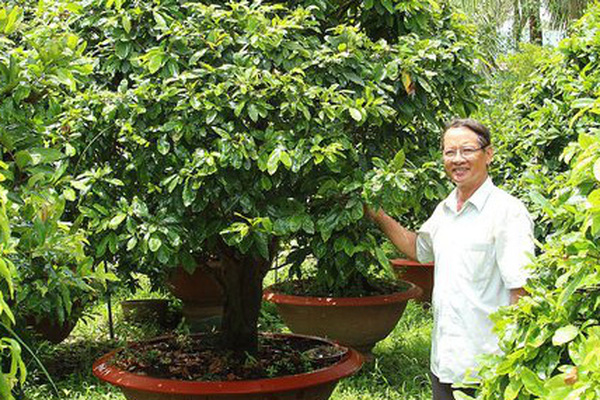 """Có 3ha """"đất vàng"""", làng này trồng loài cây gì mà chưa đến Tết đã lãi 20 tỷ đồng?"""