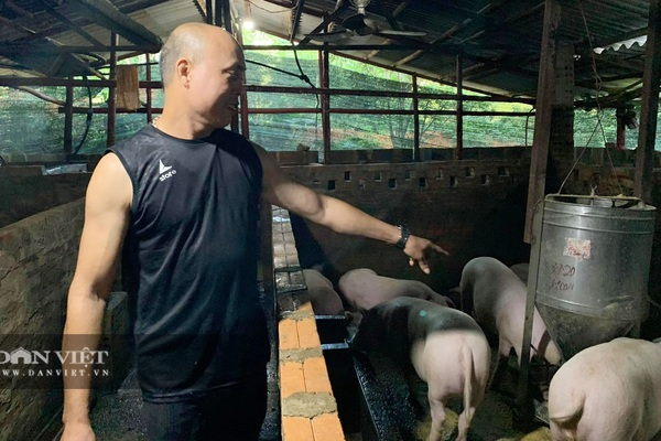 """Cao Bằng: Vào rừng nuôi lợn """"công nghệ bắt ăn kham khổ"""", ông nông dân này bán lợn giống đắt như tôm tươi"""