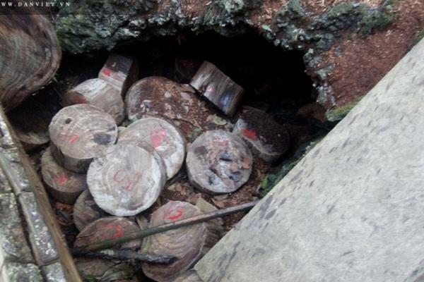 """Lời man trá trong các rừng nghiến khổng lồ: """"Vào hang ổ"""" gỗ nghiến cùng lâm tặc (Kỳ 2)"""