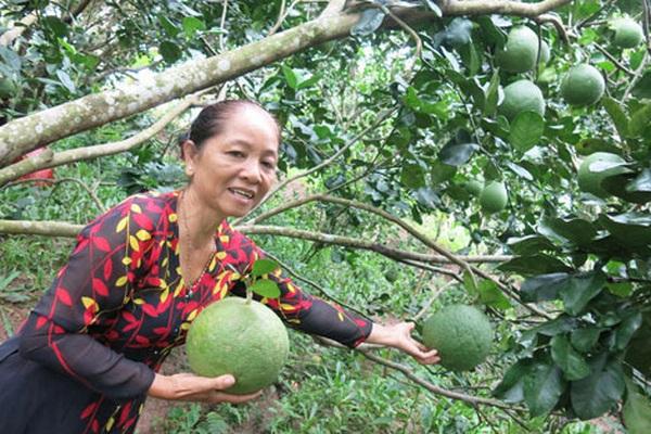 Vĩnh Long: Vùng đất này hấp dẫn lạ, không xe cộ, hàng quán, chỉ có miệt vườn ra trái quá trời
