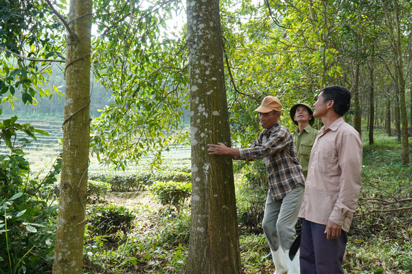 Trồng 1 tỷ cây xanh trong 5 năm, chỉ cần mỗi năm 1 người trồng 2 cây sẽ đủ