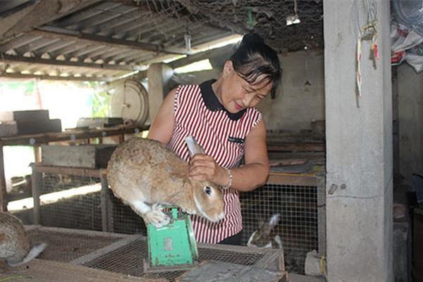 Bình Thuận: Nuôi loài thỏ có màu lông lạ, body săn chắc mà tai dài như tai dê, chưa lớn đã có người đòi mua