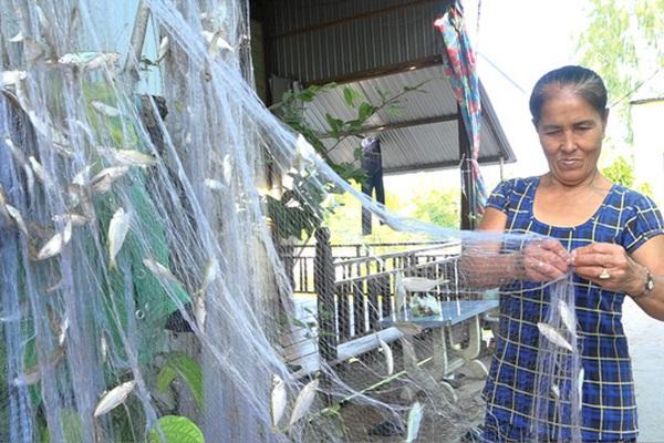 Đồng Tháp: Mùa cá ra sông, dân tấp nập thả lưới, có tay lưới dính cá chi chít phải mang về gỡ dần