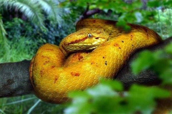 """Chuyện dựng tóc gáy về đảo rắn - nơi được coi là """"thánh địa"""" của những loài rắn kinh hoàng nhất thế giới"""