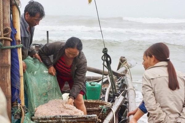 """Thanh Hóa: Sáng sớm dân nô nức ra biển """"xúc"""" hàng tạ con bé tí ti này mà kiếm tiền triệu mỗi người"""