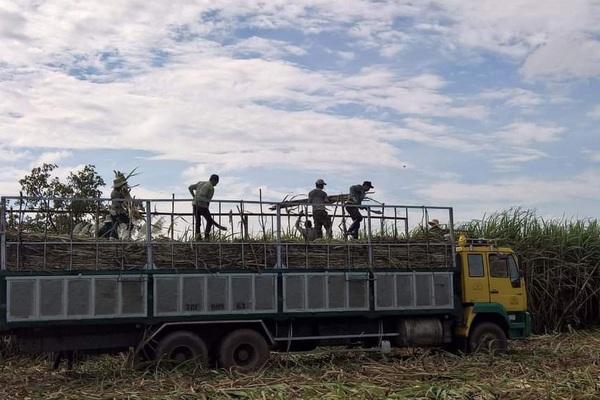"""Sau gần nột năm ATIGA có hiệu lực:  Khó khăn kép khiến ngành mía đường """"hụt hơi"""""""
