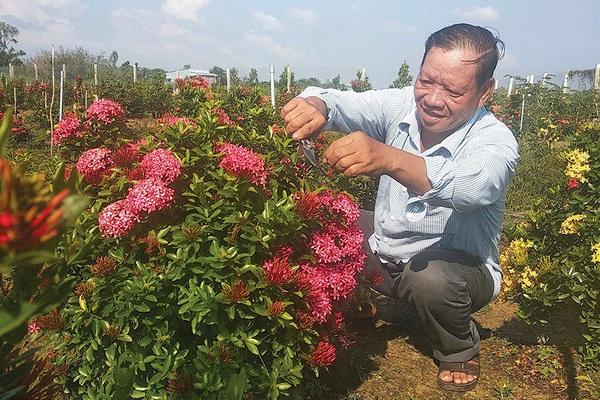 Hơn 20 năm chung thủy chỉ trồng 1 loài hoa rực rỡ này, một ông nông dân tỉnh An Giang sống đời khá giả