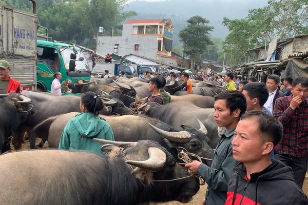 Gia súc đổ về ngày càng nhiều, nguy cơ mất an toàn tại chợ trâu bò lớn nhất tỉnh Bắc Kạn
