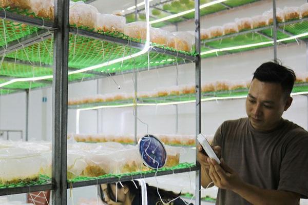 Hà Nội: Kỹ sư điện 8X bỏ nghề quê trồng nấm mới lạ ứng dụng công nghệ cao, bán 750.000 đồng/hộp