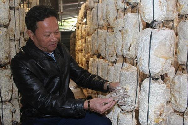 """Một ông nông dân tỉnh Hà Tĩnh """"mạnh dạn cãi lời vợ"""" quyết trồng cây không lá mà lại có tai, cái kết bất ngờ"""