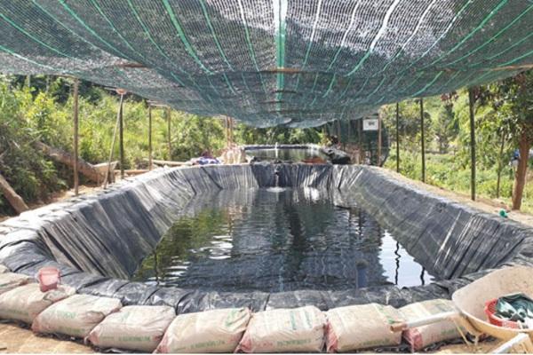 TT-Huế: Nuôi loài cá đặc sản gì ở trên núi của huyện A Lưới mà người dân thu 33 tỷ đồng mỗi năm?