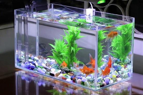 Đặt bể cá mang tài lộc cho gia đình cần chú ý đến các yếu tố phong thủy này