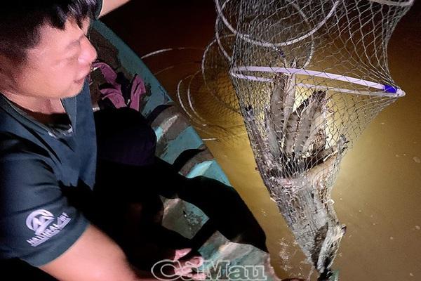 Loài tôm nào đang được tỉnh Cà Mau làm chỉ dẫn địa lý, bán đi 90 nước, vùng lãnh thổ?