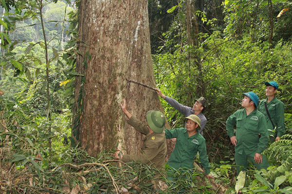 Sơn La: Khi người dân đồng hành cùng kiểm lâm giữ rừng