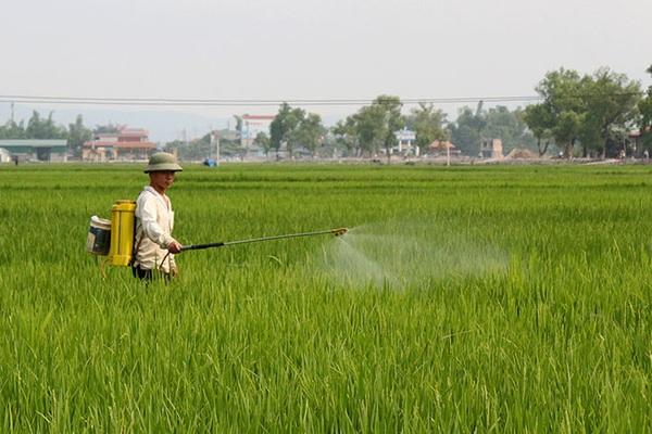 Sâu bệnh hại lúa Đông Xuân tăng cao, Bộ NN&PTNT họp trực tuyến để phòng ngừa