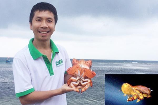 """Quảng Ngãi: Người mang tiếng """"dở hơi"""" bỏ tiền túi tìm cách hồi sinh loài cua tiến vua"""