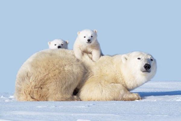 Hình ảnh cực đẹp về tình mẫu tử trong thế giới động vật