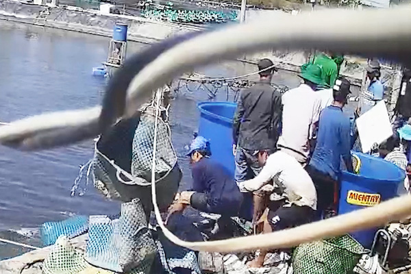 Vụ thương lái trộm tôm ở Cà Mau: Khởi tố, bắt giam thêm 6 người