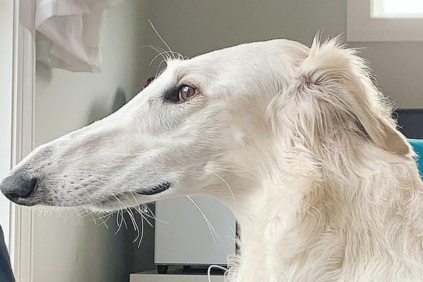 Cận cảnh chú chó có chiếc mũi có 1-0-2 trên thế giới