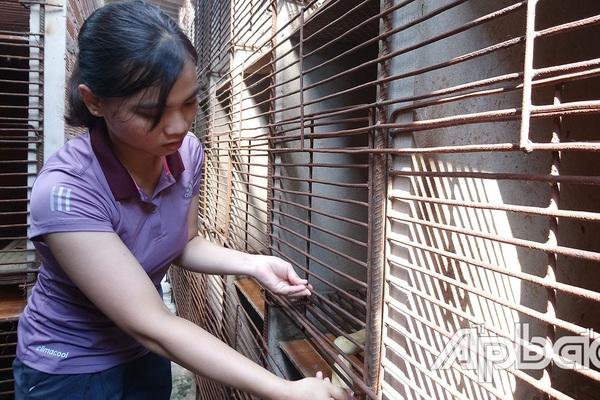 Tiền Giang: Cô nông dân xinh như hotgirl nuôi con ham ăn chuối chín, cứ bán 1 con to giá 10 triệu