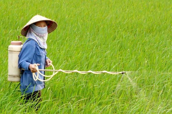 Đề xuất dừng dự trữ quốc gia kho thuốc bảo vệ thực vật 258 tấn, giá trị 42 tỷ đồng