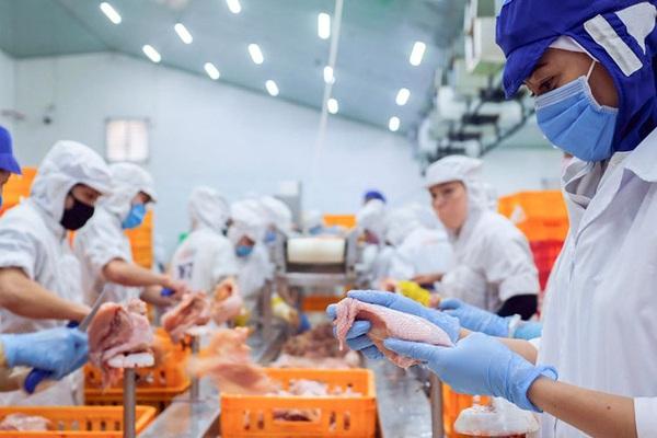 Công nghệ 4.0 giúp gà San Hà sạch cỡ nào?