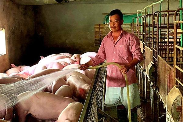 """Chỉ còn 30 lợn nái già, sau """"bão"""" dịch tả châu Phi, lão nông xứ Lạng có 400 con lợn thịt"""