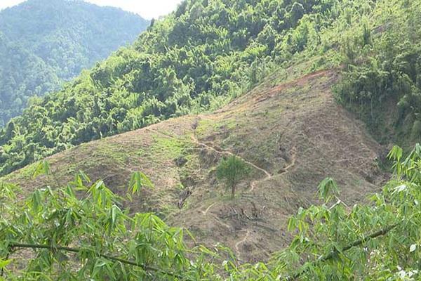 """Hòa Bình: Chủ tịch xã Tân Minh ra lệnh """"lạ đời"""" cản trở người dân trồng rừng"""