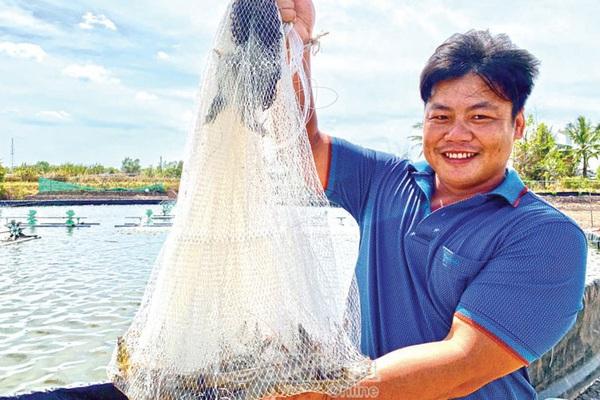 Cà Mau: Bí quyết nuôi tôm 3 giai đoạn, cứ 1ha bắt lên 48 tấn, dân trúng lớn