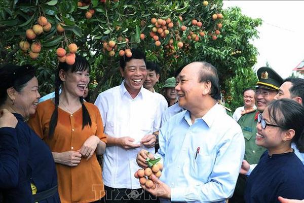 Vải thiều vào vụ, Thủ tướng lên Bắc Giang động viên đoàn xe xuất hành tiêu thụ vải