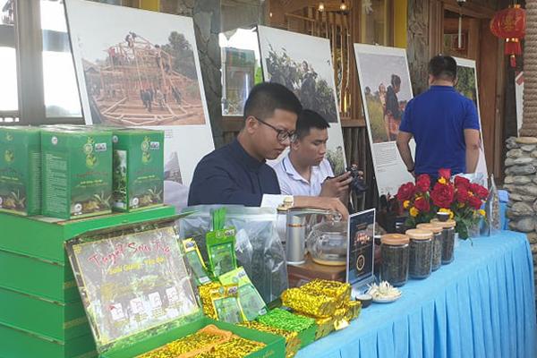 Yên Bái: Đêm tiệc trà Shan Tuyết cổ thụ đặc biệt trên đỉnh Suối Giàng