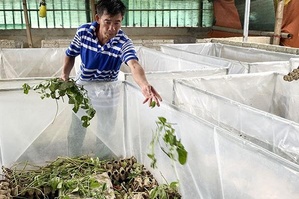 Điện Biên: Cả làng nuôi dế làm thịt để ăn, ăn không hết thì bán, có hộ thu 20 triệu/tháng