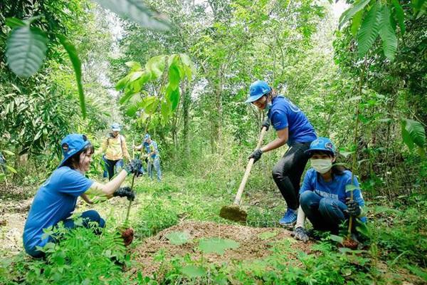 Ngành gỗ tái cấu trúc, phát triển bền vững sau Covid-19