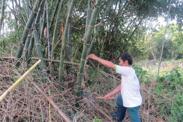 """Một ông nông dân Phú Yên sở hữu thứ """"tài sản"""" mà cả huyện không ai có"""