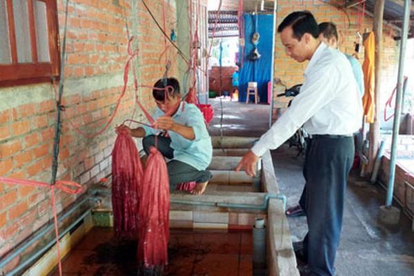 Tiền Giang: Nuôi lươn không bùn theo cách này, nông dân nhanh thành triệu phú