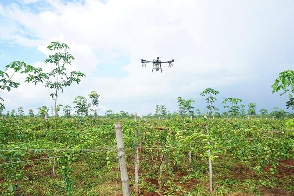 Gia Lai: Tận mắt xem máy bay không người lái phun thuốc vườn chanh leo 100ha của công ty Doverco