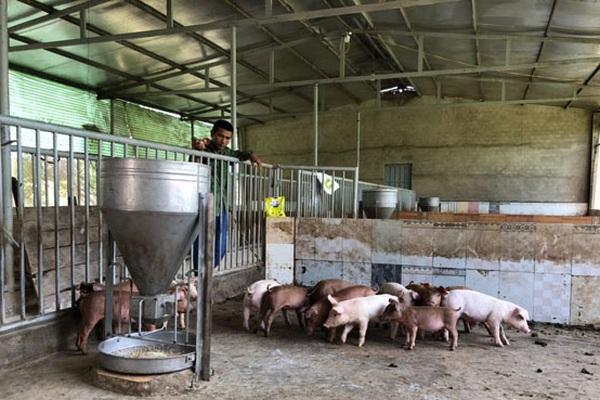 """Đánh thức tiềm năng chăn nuôi của Tây Nguyên (bài 2): """"Đất vàng"""" xây dựng vùng an toàn dịch bệnh"""