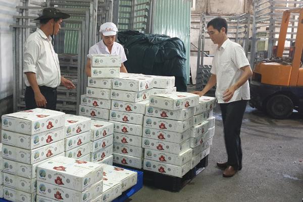 Vải thiều đi khắp Trung Quốc, Nhật Bản, Singapore, Bắc Giang thu gần 7.000 tỷ đồng