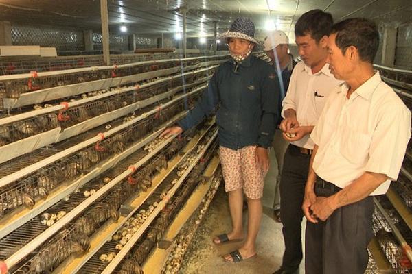 Quảng Bình: Nuôi chim bé như nắm tay mắn đẻ, một nông dân lời 1 tỷ/năm