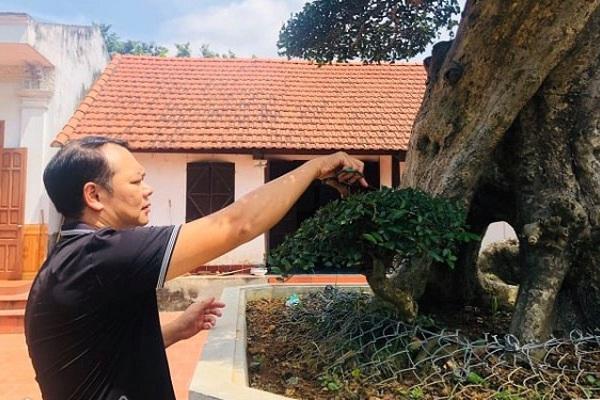 Phú Thọ: Ông thợ mộc mua cây duối cổ 400 tuổi giá 2 triệu, giờ khách trả 3 tỷ không bán