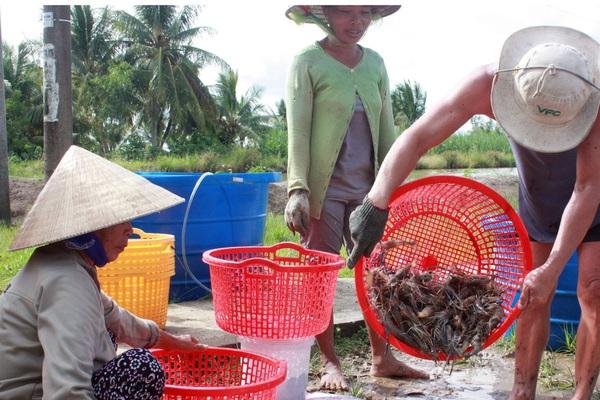 Quá nhiều BOT, chi phí chuyển nông sản từ TP.HCM ra Hà Nội tốn gấp đôi từ Việt Nam sang Mỹ
