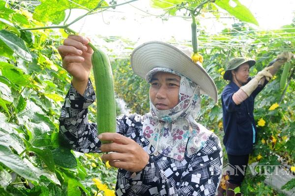 Để nông nghiệp hữu cơ bứt phá: Lấy lợi thế vùng miền xây mô hình điểm