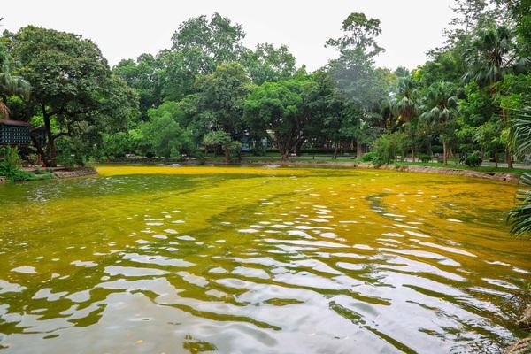 Hà Nội: Mặt nước hồ Bách Thảo bất ngờ chuyển màu vàng lạ mắt