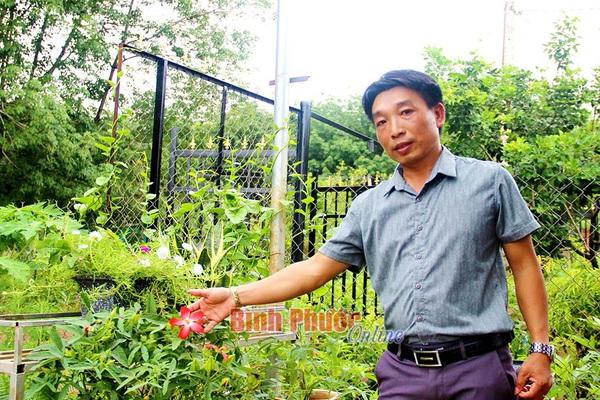 Làm giàu khác người: Một thầy giáo Bình Phước kiếm bộn tiền nhờ trồng sâm chế ra thứ trà bình dân
